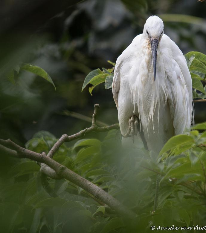 Reiger? - Deze vogel lijkt op een reiger maar zeker weet ik het ook niet. Ik viel voor het mooie verenpak, wat een schoonheid.