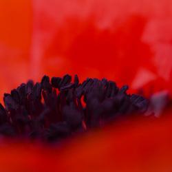 orange of nature