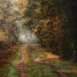 Herfst op het bospad