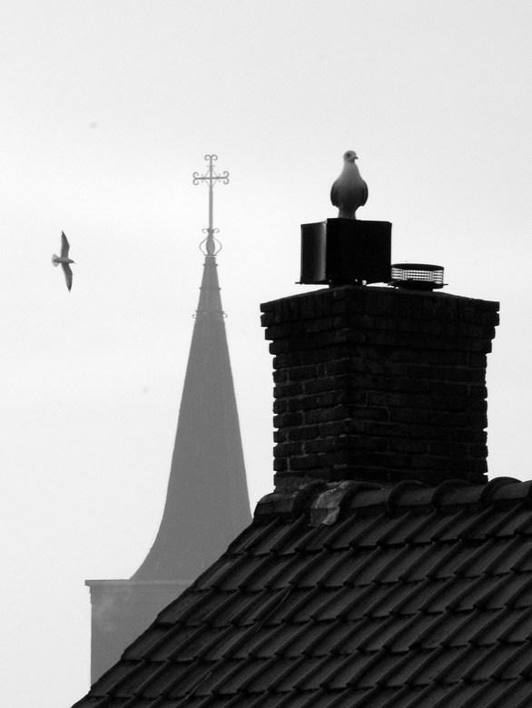 Meeuwen om de kerk - Gewoon het uitzicht uit mijn Leidse dakraam.