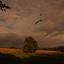 Een Bruine Kiek scheert over het dal