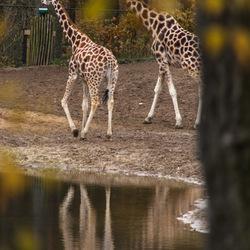 herfst in de dierentuin