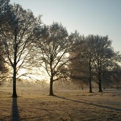 Winters tegenlicht