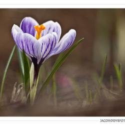 Het echte lentegevoel! (2)