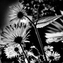 Zwart-wit zonnig