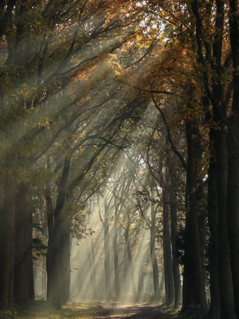 Zonneharpen in het bos  - Op een mooie ochtend met herfstkleuren en mist.