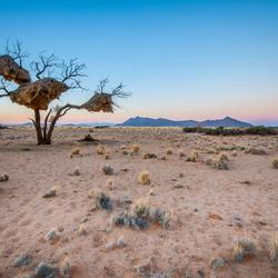 Weavers, Namibie