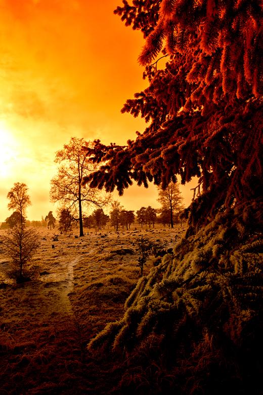 tegenlicht foto - tegenlicht foto in een winters landschap