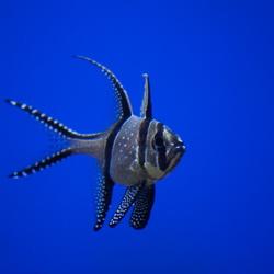 Aquarium Blijdorp