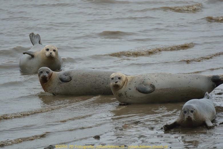 Zeehonden bij de Punt van Reide - Een goede plek om zeehonden te spotten is bij de Punt van Reide, gelegen op de grens van Eems en Dollard. Om te voor