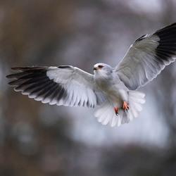 Ach meneer een mooie vogel wil ik zijn