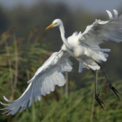 Vliegende gratie ...