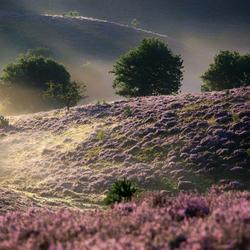 Enjoy the purple weeks ...