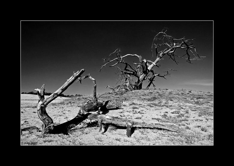 Dode boom zwart wit