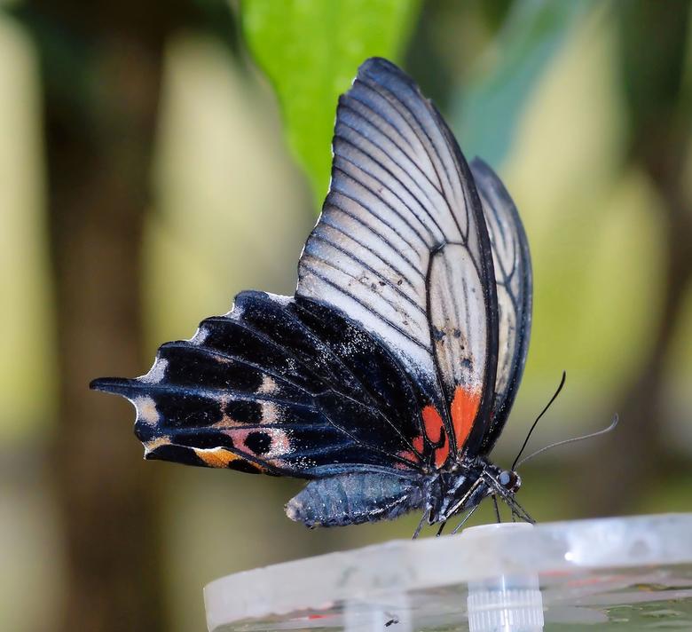 vlinder in blijdorp -