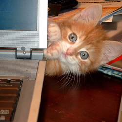 Kom nou eens achter die laptop weg . . .