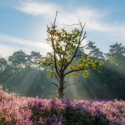 A lonely tree in morning light