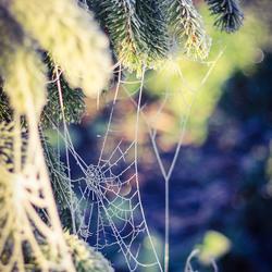 Spiderwebz