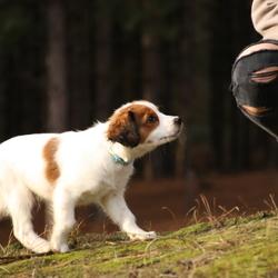 Nieuwsgierige pup Zino