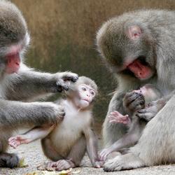 Vlooiende Moeders