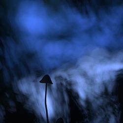 Macig mushroom