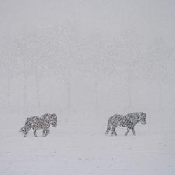 Sneeuwlanders
