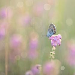 Nature's sweetness