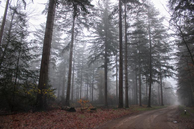 Mistige ochtend in het bos -