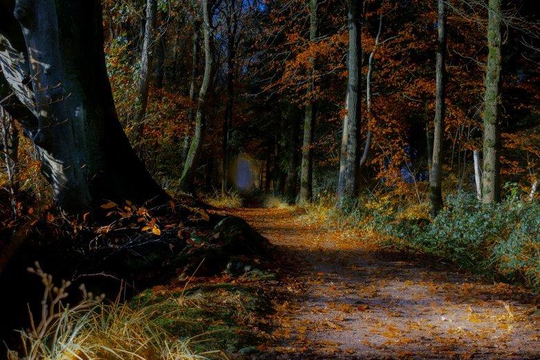 Sprookjes bos  - Mooi licht in het bos