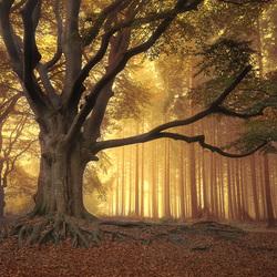 Art of nature....