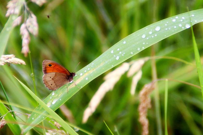 vlindertje in de natuur -