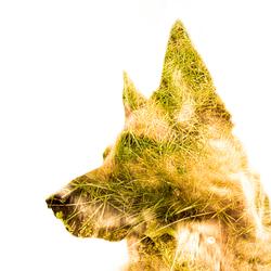 buitenhond