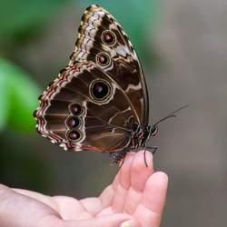 Vlinderhand