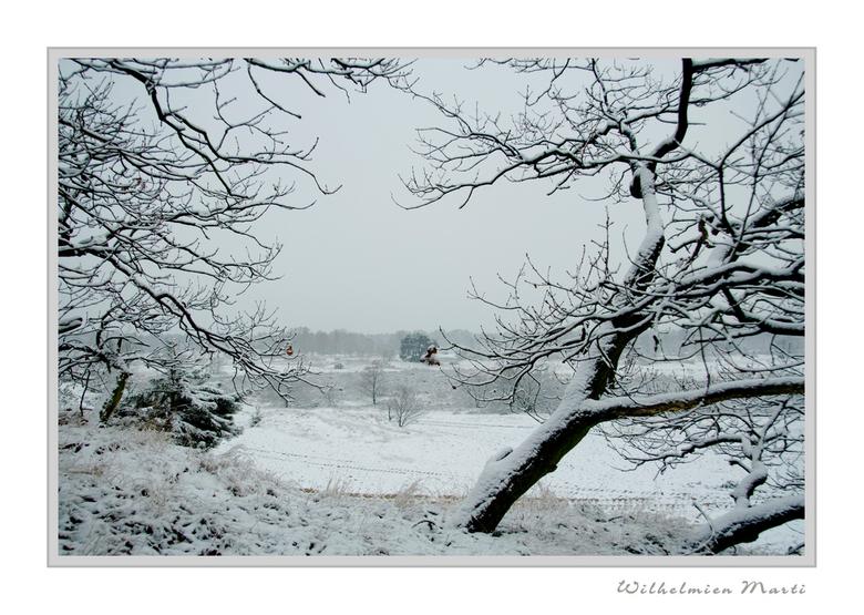 Alweer wit... - Vanmorgen zagen de duinen (Nationaal Park Loonse en Drunen Duinen!) wederom wit dus was het weer genieten tijdens de wekelijkse wandel