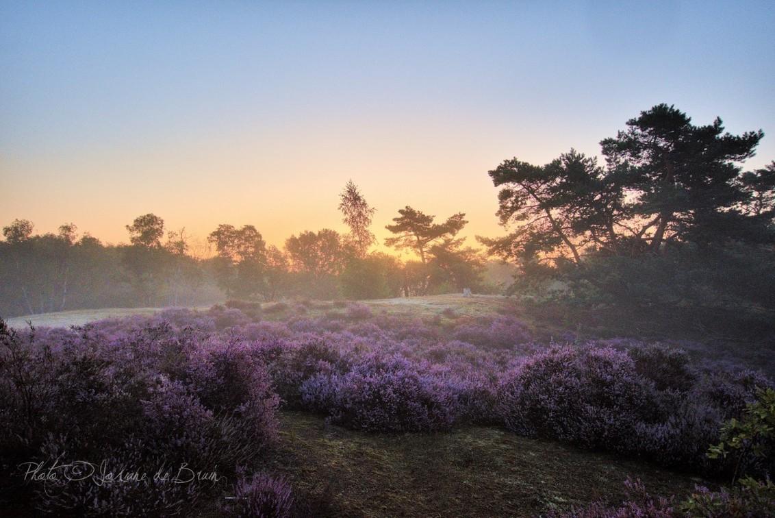 Heide in de vroege ochtendzon