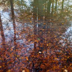 Herfstspiegeling