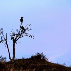 The Birds 01