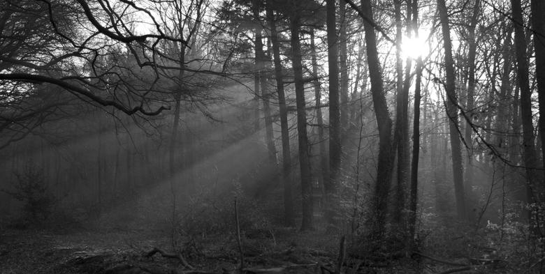 Bos - Vroege ochtend in het bos