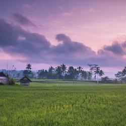 Zonsopkomst bij een rijstveld in Bali