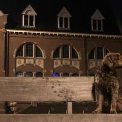 De wachtende hond(9)