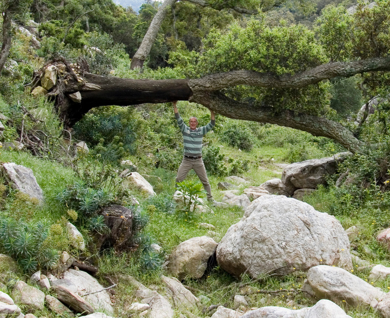 Best zwaar zo'n kurkeik! - Gorges du Lavall,  aan de oostkant van de Pyreneeën,groeien veel kurkeiken waaronder dit scheefgegroeide exemplaar.