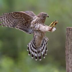 Landing Havik