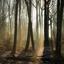 Koude ochtend in het bos