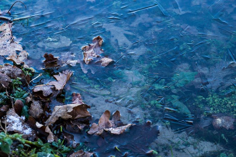 Bevroren bladeren - Herfst, of toch winter?
