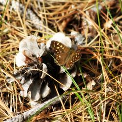 Vlinder in het bos