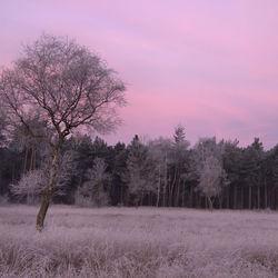 Malpie op vroege koude ochtend