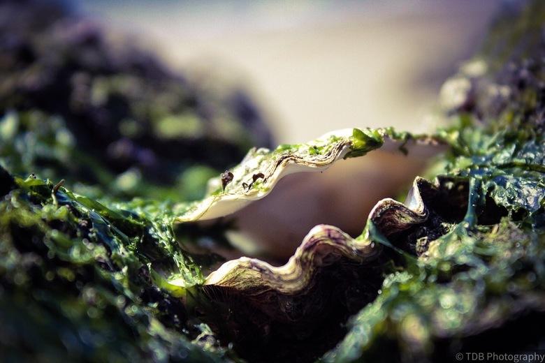 De schatten van het strand  - Heerlijk om de natuur in te duiken , strand , bos of duinen en daar de prachtige kleine dingen tegen het lijf te lopen w