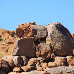 schuilen voor de warmte van de Kalahari, 48 graden