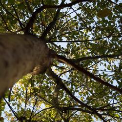 Bomen-1---zomer