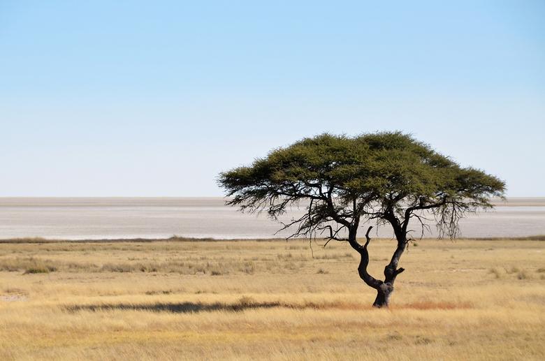 Etosha - Een eenzame boom op de savanne in Etosha National Park, Namibië. Op de achtergrond de Etosha Pan, een zoutvlakte van 4.760km2 die 23% van het